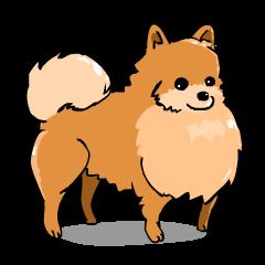 Pomeranian GON