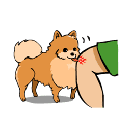 Pomeranian GON sticker #94522
