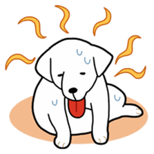 A Dog Called SHIRO sticker #115754