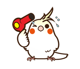 Miss Lovebird-Naughty Cockatiel sticker #122398