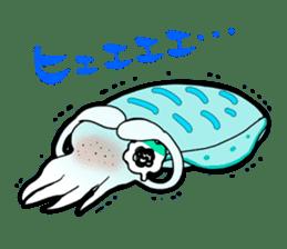 Bigfin reef squid sticker #125161