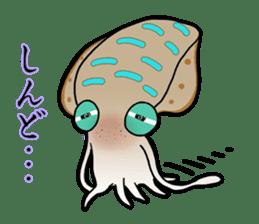 Bigfin reef squid sticker #125178