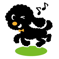 A lovely toy poodle(Black)