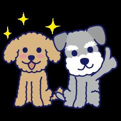 Schna & Toypoo 1st