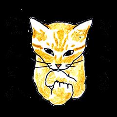brown tabby cat koto-chan