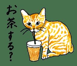 brown tabby cat koto-chan sticker #131142