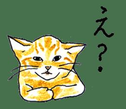 brown tabby cat koto-chan sticker #131149