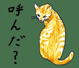brown tabby cat koto-chan sticker #131155