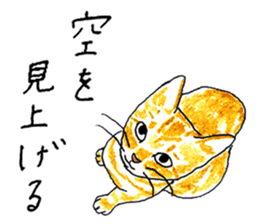 brown tabby cat koto-chan sticker #131156