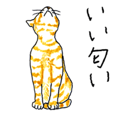 brown tabby cat koto-chan sticker #131157