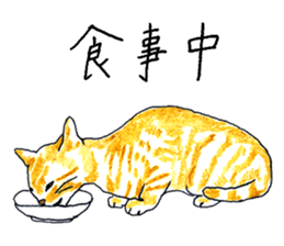 brown tabby cat koto-chan sticker #131160