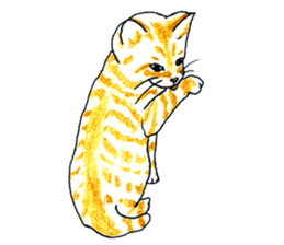brown tabby cat koto-chan sticker #131162