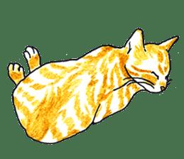 brown tabby cat koto-chan sticker #131166