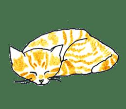 brown tabby cat koto-chan sticker #131171