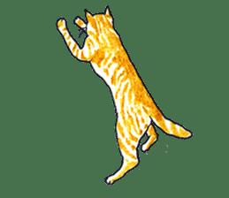 brown tabby cat koto-chan sticker #131175