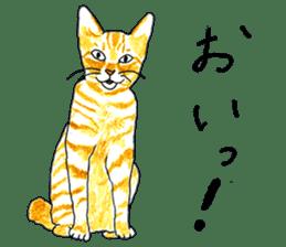 brown tabby cat koto-chan sticker #131176