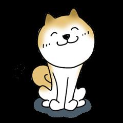 A Japanese dog, Maru 2