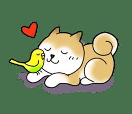 A Japanese dog, Maru 2 sticker #134207