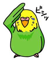 Coby and Jolly budgies sticker #135638