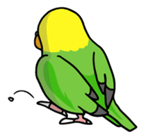 Coby and Jolly budgies sticker #135640