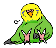 Coby and Jolly budgies sticker #135641