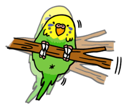 Coby and Jolly budgies sticker #135643