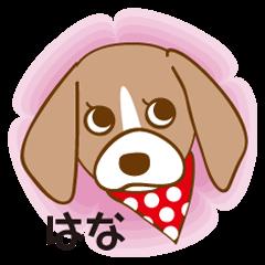 CAPRICIOUS BEAGLE DOG HANA