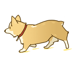 MAIRO the Corgi sticker #145428