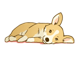 MAIRO the Corgi sticker #145439