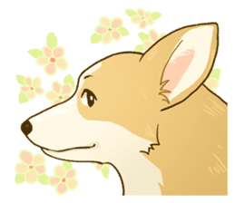 MAIRO the Corgi sticker #145445