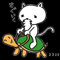 Cat Hermit