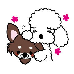 UG U+x+U DOGS (Chihuahua and Poodle)