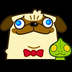 Pug Boo dog's Life