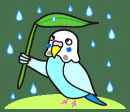 Cute Bluenee of the budgie bird sticker #183419