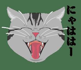 SABATORA realistic face of cat sticker #185627
