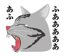 SABATORA realistic face of cat sticker #185644