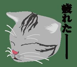 SABATORA realistic face of cat sticker #185648