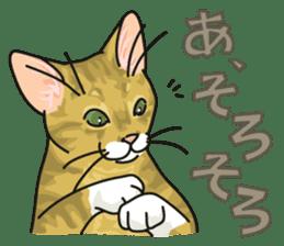 NO CAT NO LIFE Satowo cat stamp2 sticker #196163
