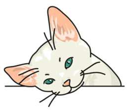 NO CAT NO LIFE Satowo cat stamp2 sticker #196164