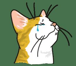 NO CAT NO LIFE Satowo cat stamp2 sticker #196169