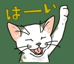 NO CAT NO LIFE Satowo cat stamp2 sticker #196170