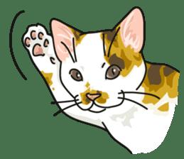 NO CAT NO LIFE Satowo cat stamp2 sticker #196172