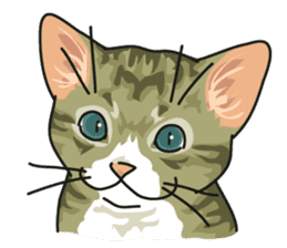 NO CAT NO LIFE Satowo cat stamp2 sticker #196174