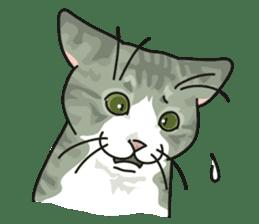 NO CAT NO LIFE Satowo cat stamp2 sticker #196177