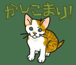 NO CAT NO LIFE Satowo cat stamp2 sticker #196178