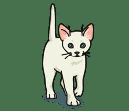 NO CAT NO LIFE Satowo cat stamp2 sticker #196180
