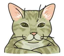 NO CAT NO LIFE Satowo cat stamp2 sticker #196182