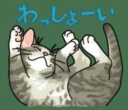 NO CAT NO LIFE Satowo cat stamp2 sticker #196183