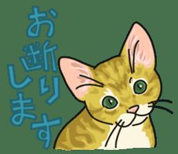 NO CAT NO LIFE Satowo cat stamp2 sticker #196191