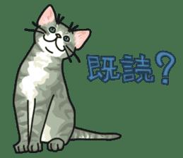 NO CAT NO LIFE Satowo cat stamp2 sticker #196192